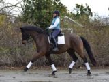 AA or YR Dream Horse ready for PSG