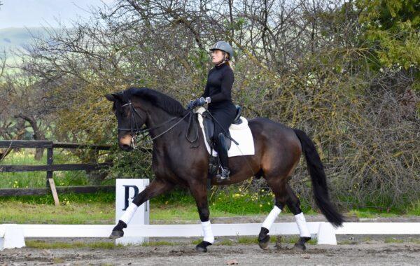 AA or YR/Jr Dream Horse