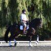 HARRIETT sold to Jr. Rider Maggie Evans